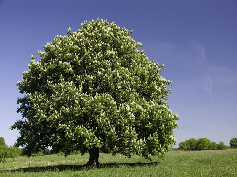 Nomes de árvores